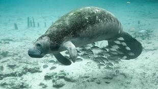 Número de animais marinhos caiu pela metade em 40 anos, alertou nesta quarta-feira a ONG ambiental WWF.