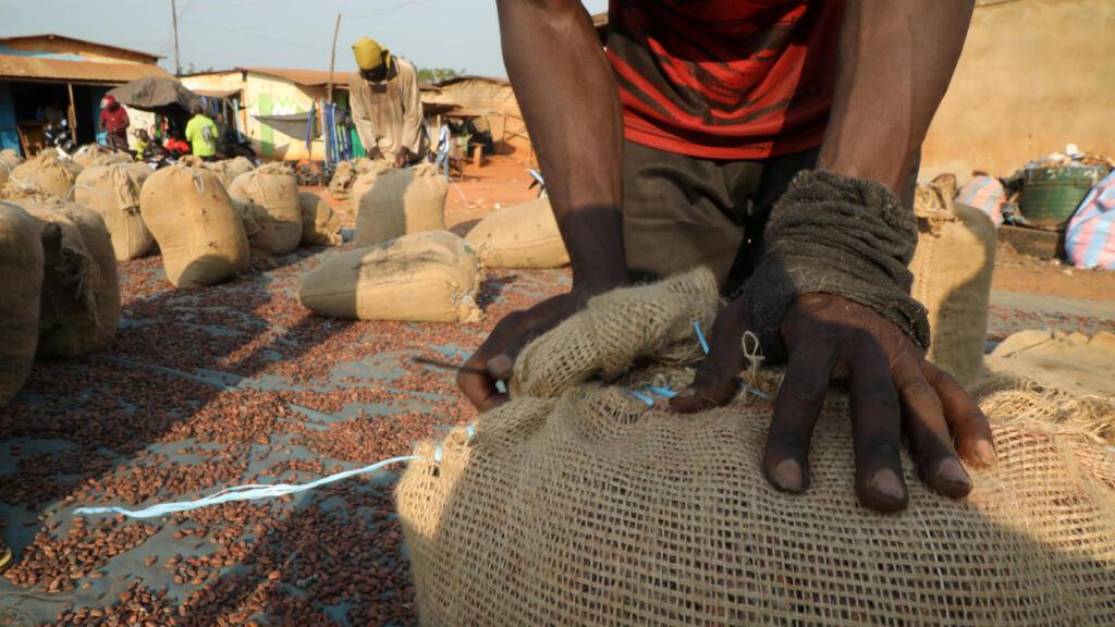 Cacao durable: la Côte d'Ivoire doit s'adapter aux nouvelles exigences de l'UE