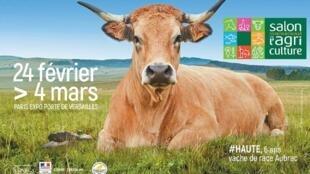 La estrella del Salon 2018 ' Haute', una vaca Aubrac de 6 años