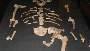 Replica of the remains of Lucy