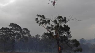 Un hélicoptère survolant un arbre brûlé après un feu à Bundoora, dans la banlieue de Melbourne.