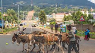 Sodo est une ville du sud de l'Ethiopie, située dans la zone Wolayta.
