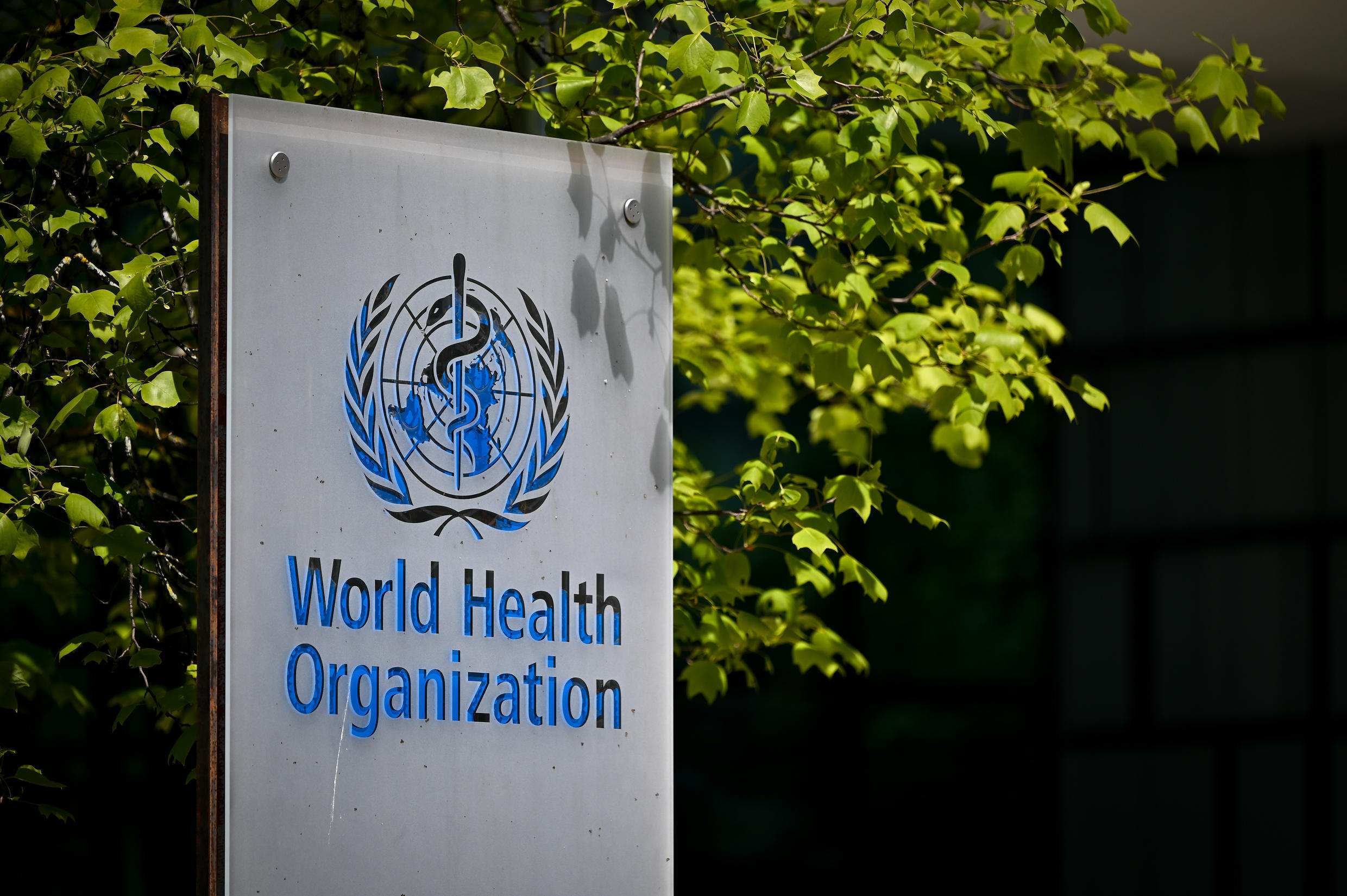Major reform of the UN health agency is on the agenda at the annual meeting of member states
