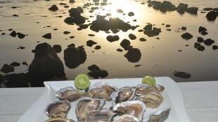 Les huîtres du Sénégal sont une source de revenus non négligeable pour le pays.