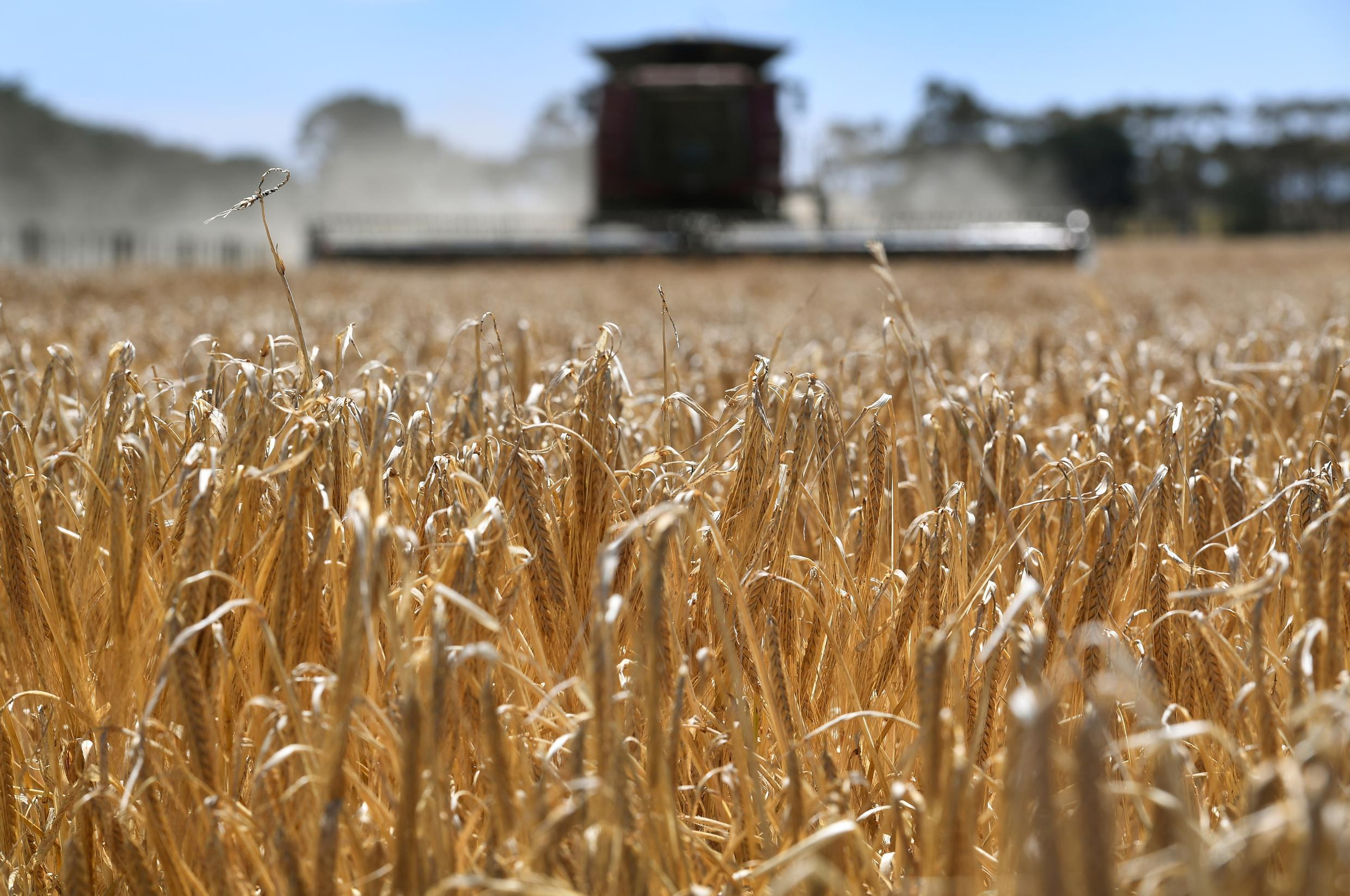 Australia's barley exports to China had been worth around US$1 billion a year before a recent drought