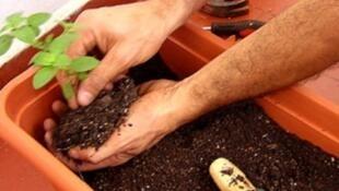 Cuidado com plantas em casa expõe franceses a pesticidas.