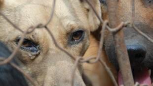 網絡流傳的玉林狗肉節的照片