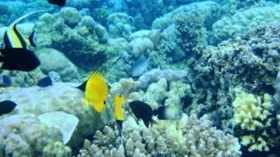 Le parc national marin de Bunaken, en Indonésie.