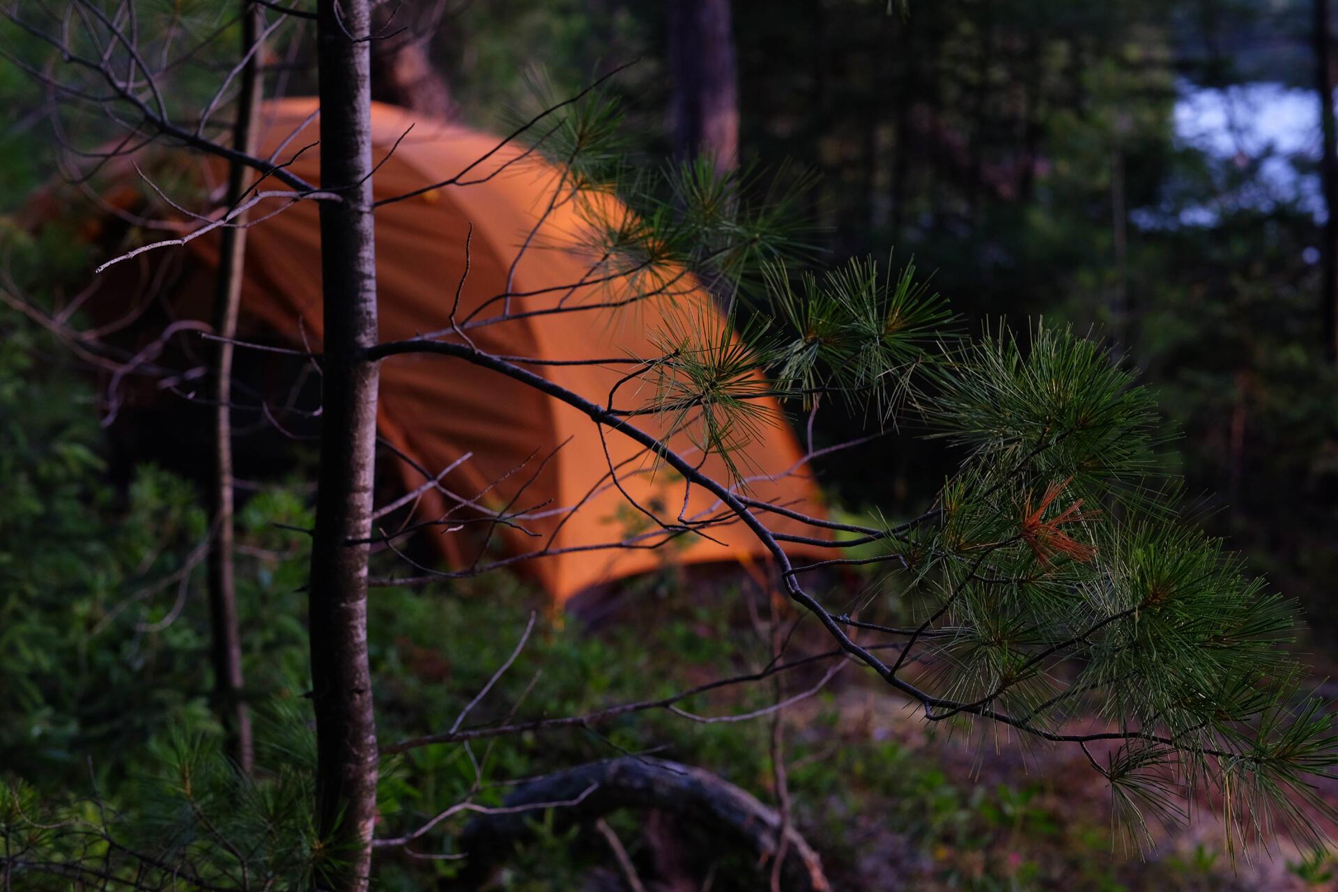 Dans le secteur de l'île aux Fraises, camping rustique sur un îlot rocheux parmi les pins.