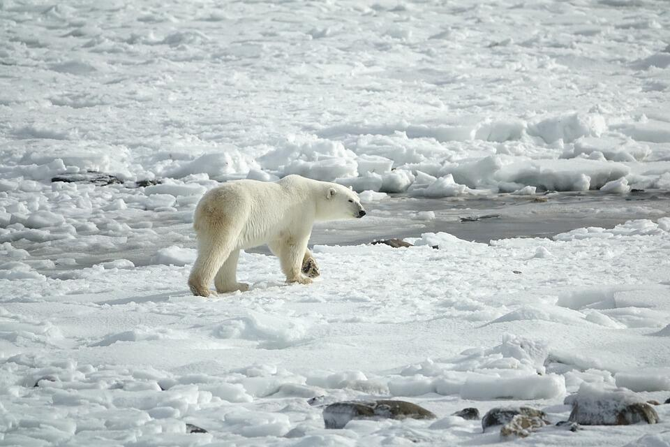 """Glaciers and ice sheets are experiencing """"unprecedented"""" changes because of global warming."""