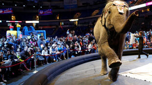 An elephant performs in the pre-show entertainment at a circus. Illustrative purposes only.