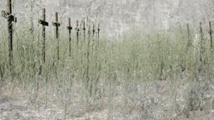 Vue du «cimetière des oubliés», qui abritaient les soldats souffrant de démence pendant la Grande Guerre à Cadillac, près de Bordeaux.