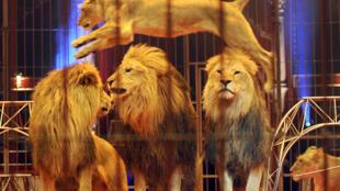 Animais circo