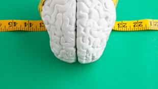 Le volume du cerveau humain a diminué de 10% depuis 30 000 ans.