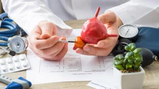 Un médecin pointant la prostate, cette glande de l'appareil génital masculin.