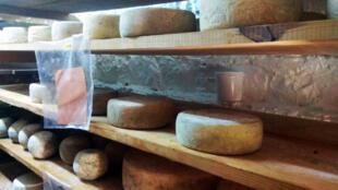 La cave à fromages de Borj Lella, près de Béja, où affinent des tommes de brebis.