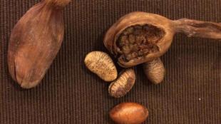 Des épices Mbongo ( la gousse)  et pèbè ( les graines ).