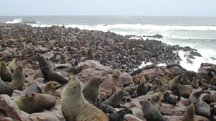 1600px-Cape_Fur_Seals_Cape_Cross