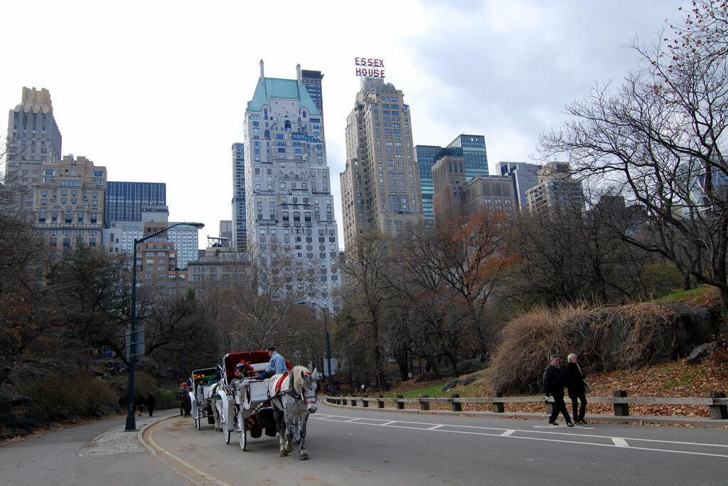 Horse-drawn carriages in Central Park, New York City