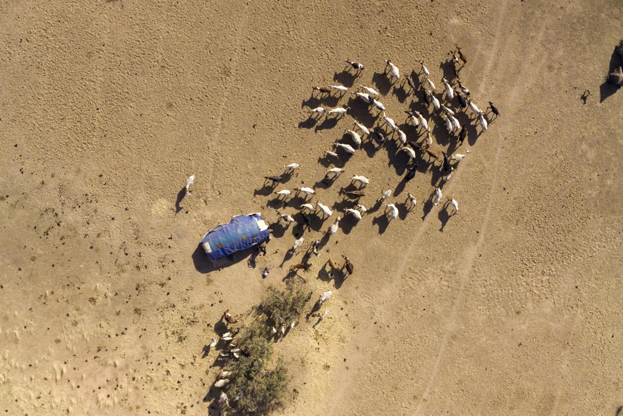 Troupeau au Tchad où les conflits entre éleveurs et agriculteurs sont récurrents (illustration).