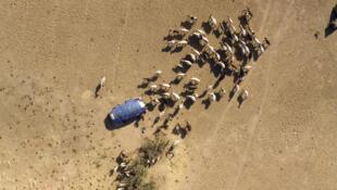Selon l'opposition tchadienne, le code pastoral favoriserait les éleveurs au détriment des agriculteurs.