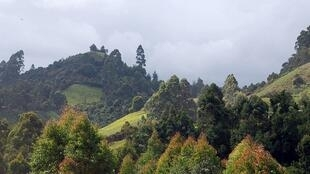 The hills of Murang'a County, Kenya.