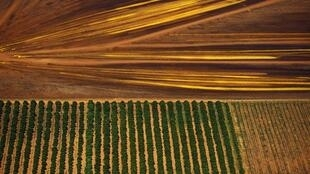 Le Qatar a acheté 22 millions d'hectares en Australie.