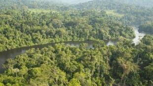 La forêt du bassin du Congo.