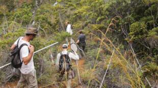 Les chercheurs rentrent au camp de base de l'expédition, après une journée de collecte dans cette petite forêt d'altitude quasi-inexplorée.