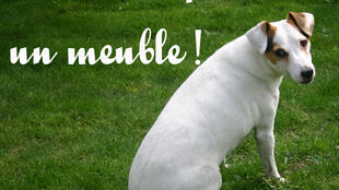 Афиша в защиту животных: «Я не мебель!»