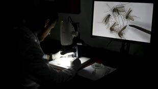 Các nhà khoa học đã xác định Virus Zika lây truyền qua muỗi là nguyên nhân gây bệnh teo não ở trẻ em.