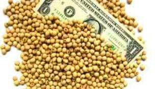 圖為大豆貿易圖片