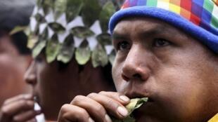 Le mâchage de feuilles de coca est une tradition des indiens des Andes pour combattre notamment les effets de l'altitude.