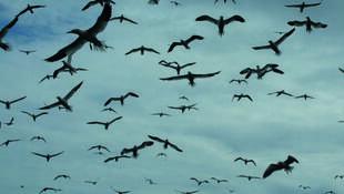 Faune sauvage, biodiversité et santé, quels défis ?