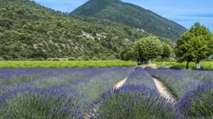 Parc Régional des Baronnies provençales, à Venterol.