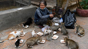 Au Cambodge, il n'existe pas de système d'aides généralisées pour les personnes sans emploi ou pour les plus vulnérables.