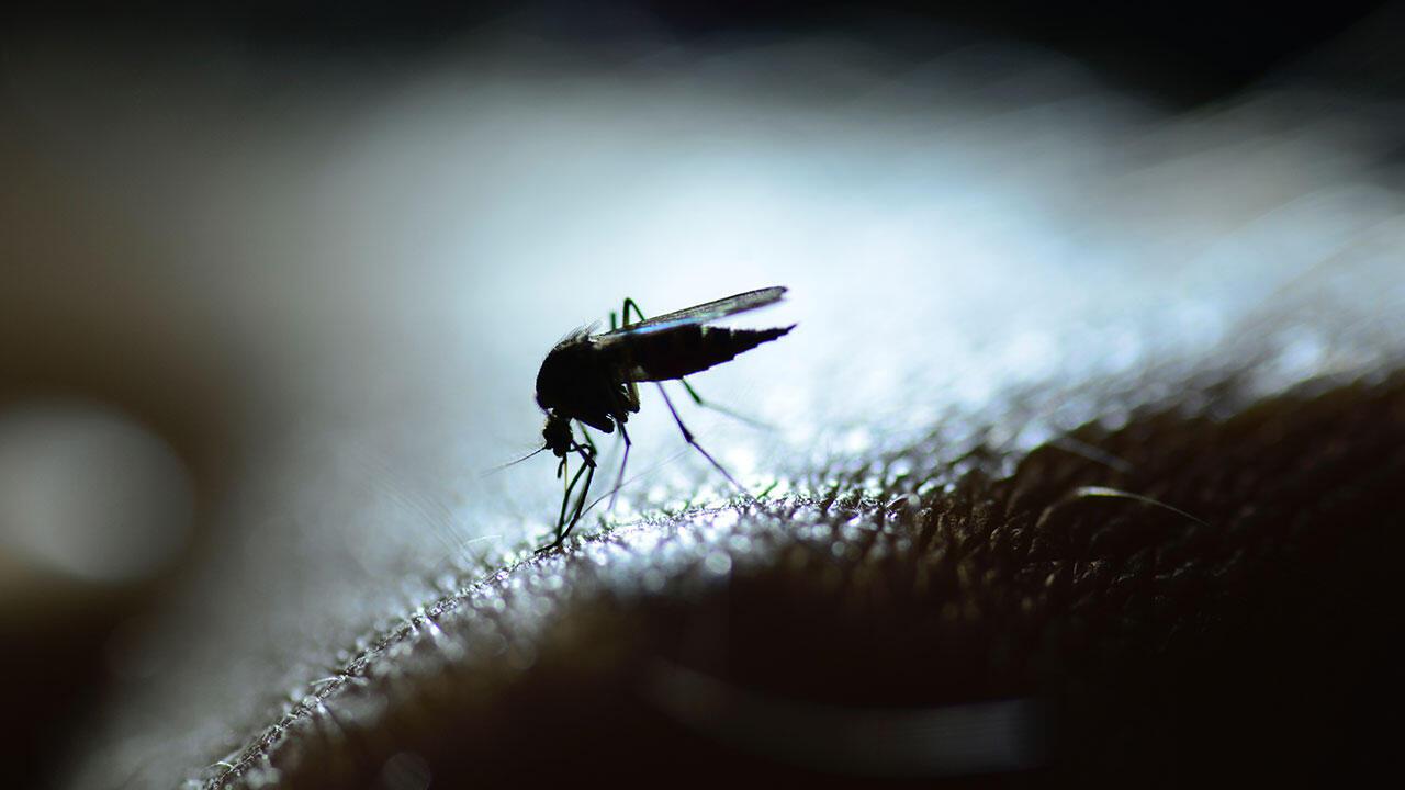 Malaria ni ugonjwa unaoweza kusababisha kifo, ambao uliua watu 400,000 duniani mwaka wa 2019.