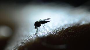 Le paludisme est une maladie potentiellement mortelle, qui a causé 405 000 décès en 2018, dont 94% en Afrique.