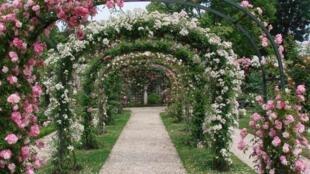 Lối đi trong vườn hồng ở L'Haÿ les Roses.