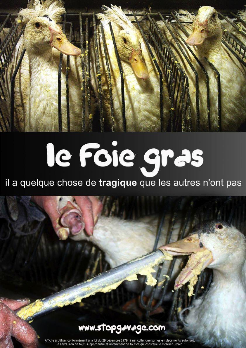 O foie gras é obtido através da introdução ,por meio de um tubo e à força, de grandes quantidades de milho cozido.