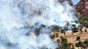 آتشسوزی در جنگلهای زاگرس ایلام