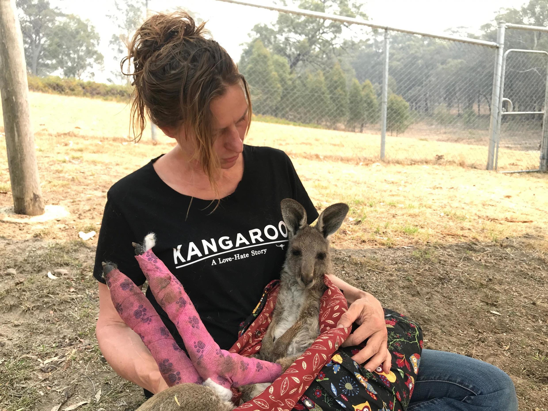 澳大利亞一志願者照看受大火影響袋鼠資料圖片