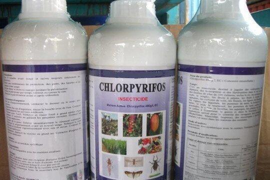 Inseticida clorpirifós é usado há mais de 50 anos na agricultura, apesar das pesquisas comprovando o seus efeitos à saúde humana.