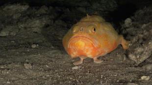 Las especies que viven a estas profundidades son muy vulnerables a la sobrepesca, porque su capacidad de recuperación es muy limitada.