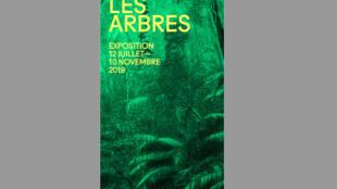 La Fondation Cartier abrite en ce moment, l'exposition d'art «Nous les arbres» (capture d'écran).