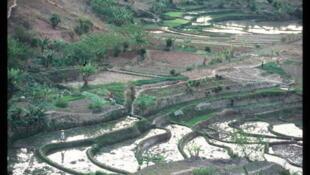 Une rizière près d'Antisirabe, à Madagascar.