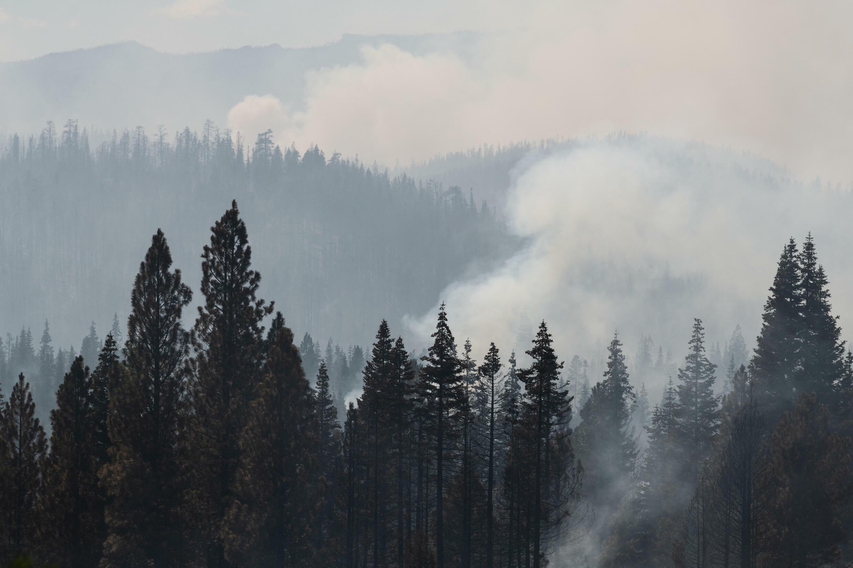 Des arbres brûlés dans la section Bravo Bravo du Bootleg Fire le 21 juillet 2021 dans la Fremont National Forest de l'Oregon.