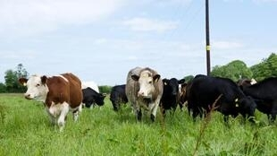 牛排放甲烷
