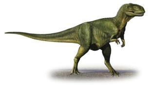 L'abelisaurus est un dinosaure ayant vécu en Amérique du Sud.