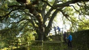 arbre-europeen-de-lannee-le-concours-a-devoile-son-palmares-2021